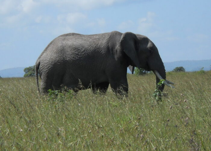 elephant in Aberdare