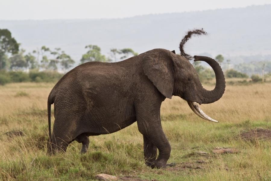 elephant in samburu